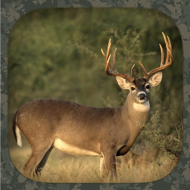 Hunting light blood tracker on the app store whitetail hunting calls aloadofball Images