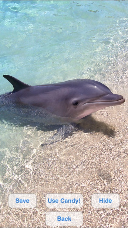 Lovely Dolphins Slideshow & Wallpapers
