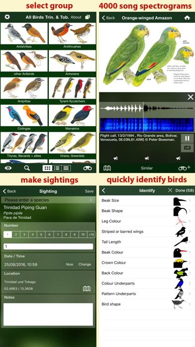 All Birds Trinidad and Tobago - a field guide