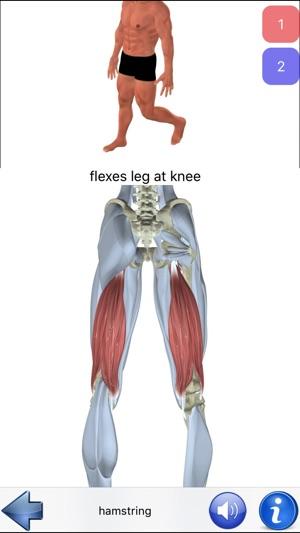Visual Anatomy im App Store