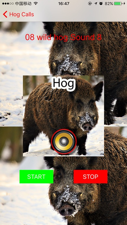 Real Hog Hunting Calls & Sounds screenshot-2