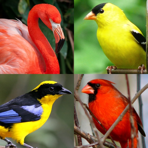 Bird World - Quiz about Famous Birds of the Earth