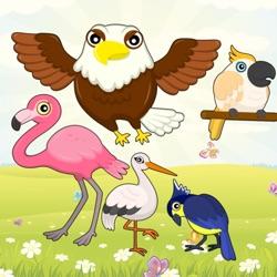 飞鸟,游戏为幼儿和儿童:发现的鸟类!教育游戏