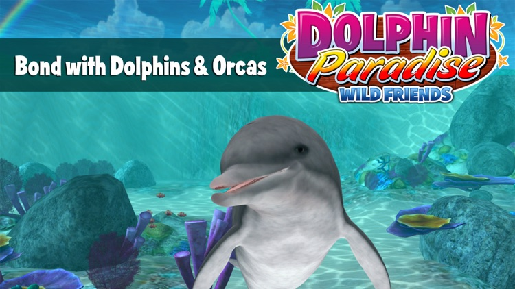 Dolphin Paradise - All Access