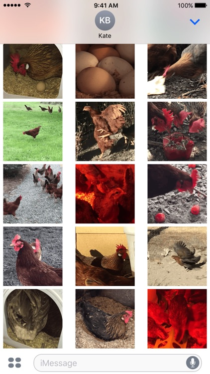 Chicken GIFs screenshot-4