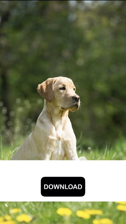 Dog & Puppy Wallpapers - woof! screenshot-6