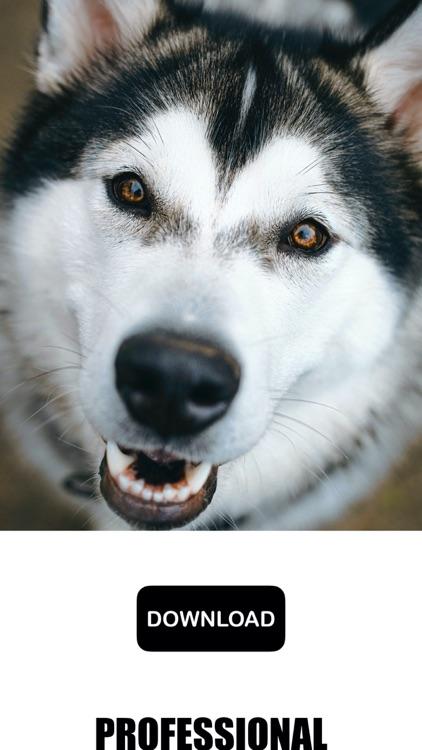 Dog & Puppy Wallpapers - woof! screenshot-7