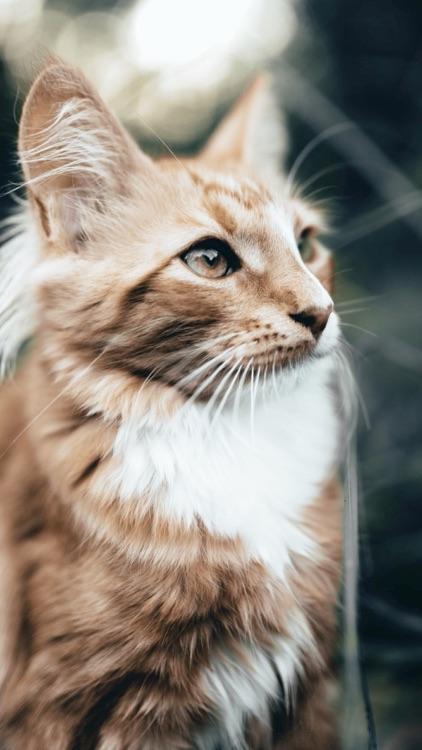 Cat & Kitten Wallpapers - meow screenshot-5