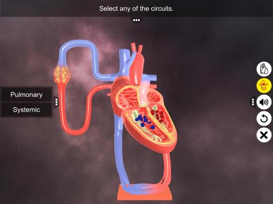 Double circulation screenshot 11