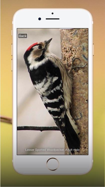 All Birds UK - the Photo Guide screenshot-9