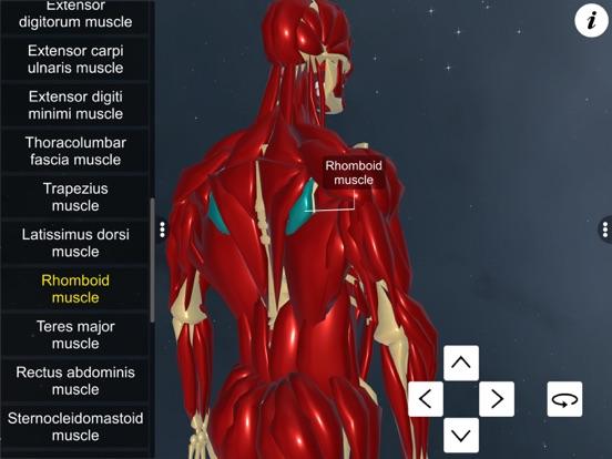Learn Muscular System screenshot 12