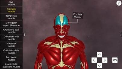 Learn Muscular System screenshot 3
