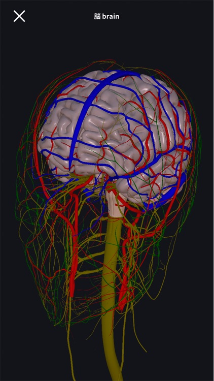 3D anatomy teamLabBody2020 screenshot-4
