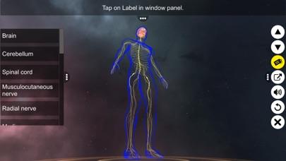 Human Nervous system screenshot 2