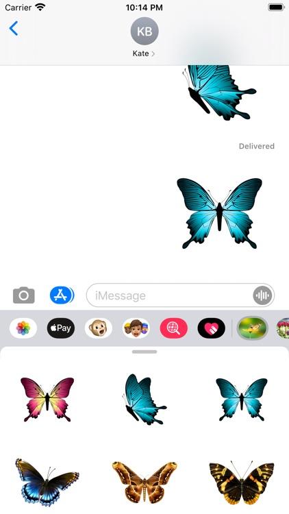 Amazing Butterflies