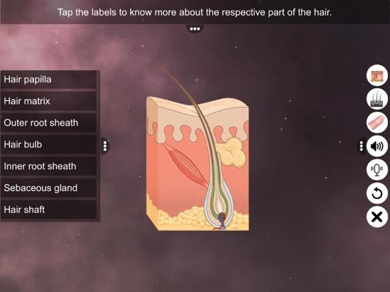 Skin: Integumentary System screenshot 11