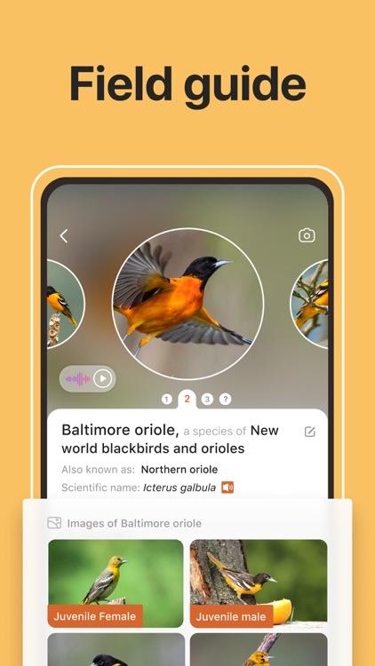 Picture Bird: Birds Identifier screenshot-3
