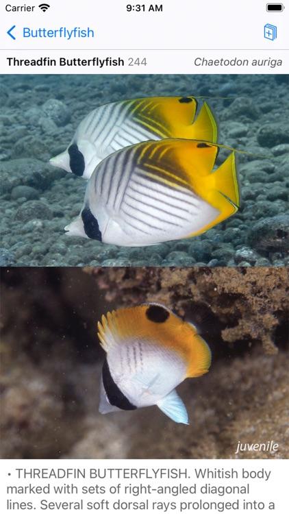 Solomon Islands Fish ID screenshot-8