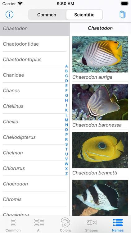 Solomon Islands Fish ID screenshot-9