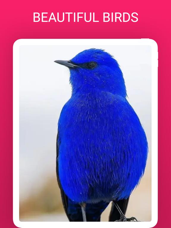 Bird Box - Photo Identify Bird screenshot 6