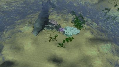熱帯魚オアシス紹介画像8
