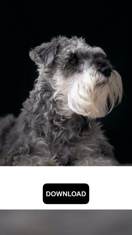 Dog & Puppy Wallpapers - woof! screenshot-8