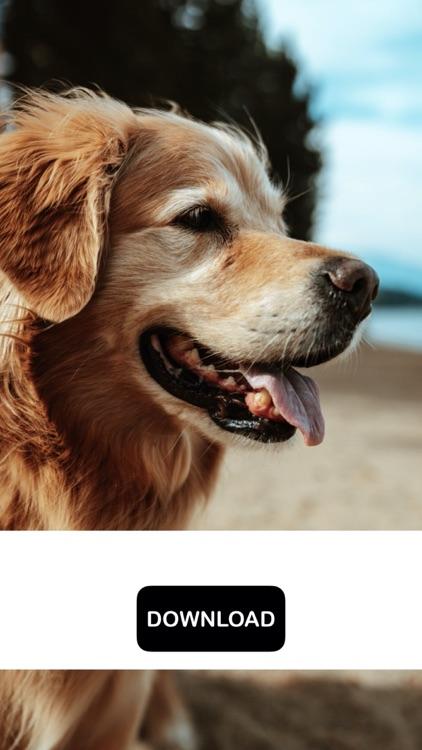 Dog & Puppy Wallpapers - woof! screenshot-5