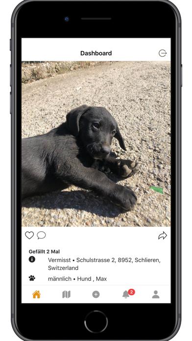 Animal Patrol Screenshot