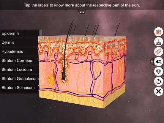 Skin: Integumentary System screenshot 9