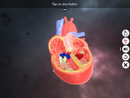 Double circulation screenshot 8