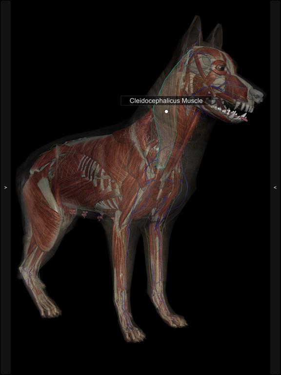 3D Canine Anatomyのおすすめ画像9