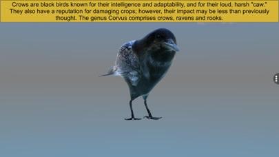 Diversity in Living: Aves screenshot 5