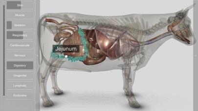 3D Bovine Anatomyのおすすめ画像8