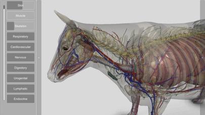 3D Bovine Anatomyのおすすめ画像3