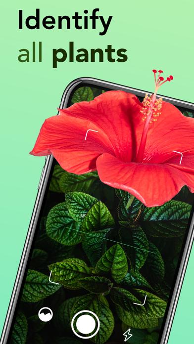 はなの名前 花の名前を調べる 植物の名前 花の名前 - 植物のおすすめ画像1