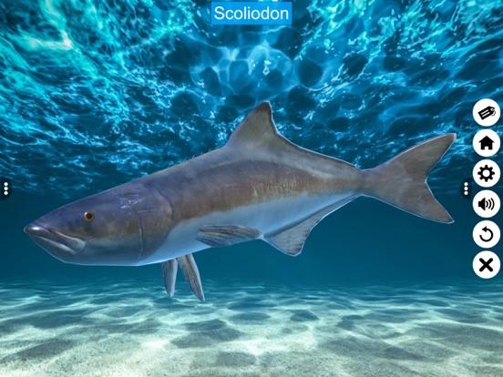 Diversity in Living: Pisces screenshot 16