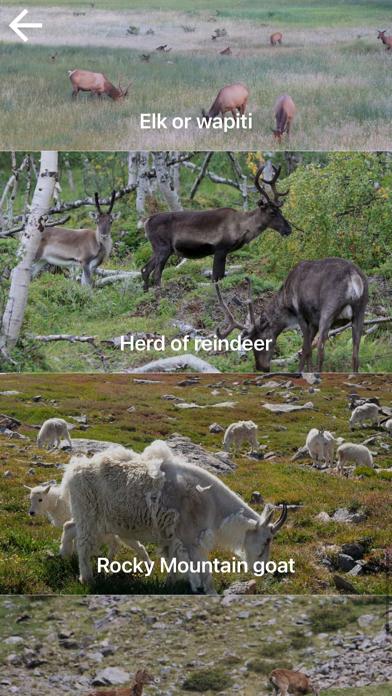自然と野生生物紹介画像6