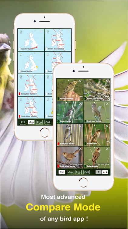 All Birds UK - the Photo Guide screenshot-5