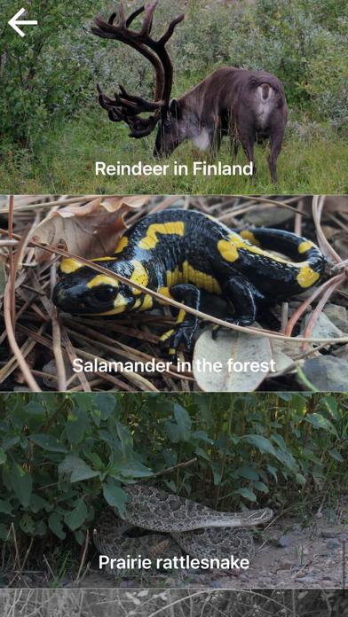自然と野生生物紹介画像2