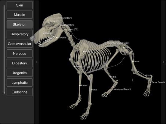 3D Canine Anatomyのおすすめ画像4