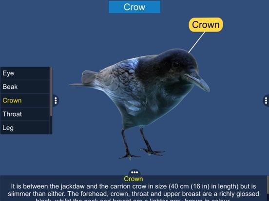 Diversity in Living: Aves screenshot 18