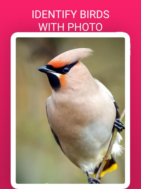 Bird Box - Photo Identify Bird screenshot 5