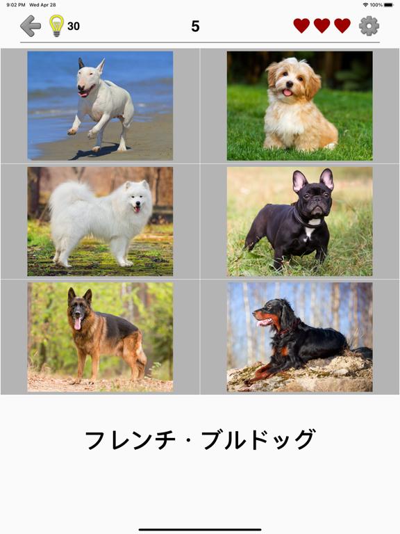 犬 - 写真付きクイズ、犬の品種一覧のおすすめ画像1