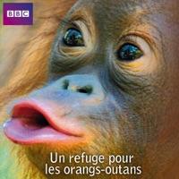Télécharger Un refuge pour les orangs-outans Episode 3