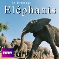 Télécharger En direct des éléphants Episode 1