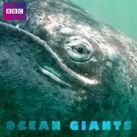 Télécharger Ocean Giants, Series 1 Episode 3