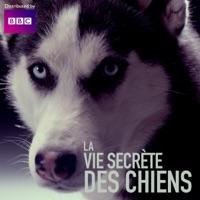 Télécharger La vie secrète des chiens Episode 1