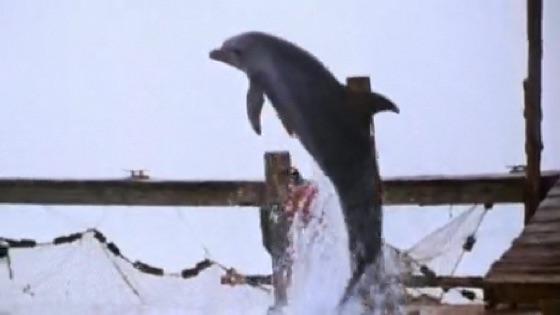 flipper 1996 movie trailer