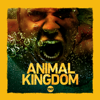 Animal Kingdom - Incoming  artwork