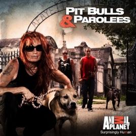 watch pitbulls and parolees season 9 episode 1